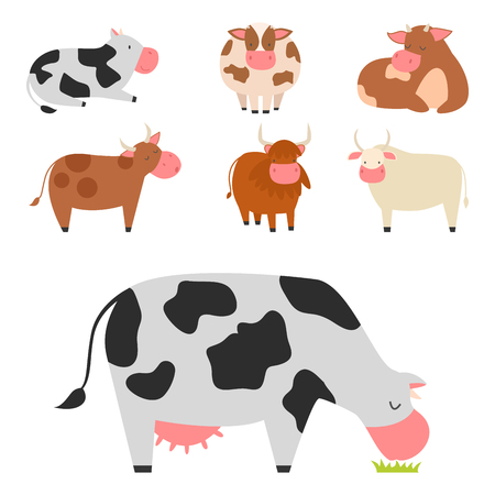Bulls cows farm animal character vector illustration OF cattle mammal.