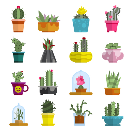 Nature succulent home cactus tropical plant vector illustration. Ilustrace