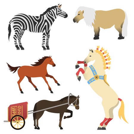 multiple: Horse pony stallion isolated different breeds color farm equestrian animal characters vector illustration.