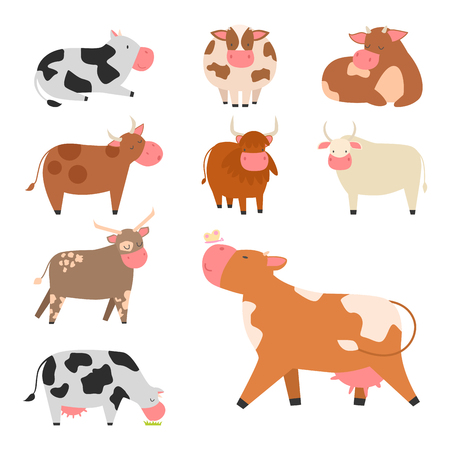 Bulls cows farm animal character vector illustration cattle mammal nature wild beef agriculture. 일러스트