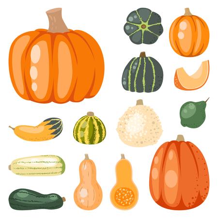 Fresh orange pumpkin decorative seasonal ripe food organic healthy vegetarian vegetable vector Illustration