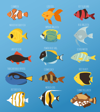 paracanthurus: Exotic tropical fish race different breed colors underwater ocean species aquatic strain nature flat vector illustration.
