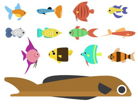 school of fish: Exotic tropical fish race different breed colors underwater ocean species aquatic strain nature flat isolated vector illustration. Decorative wildlife sort cartoon fauna aquarium water marine life.