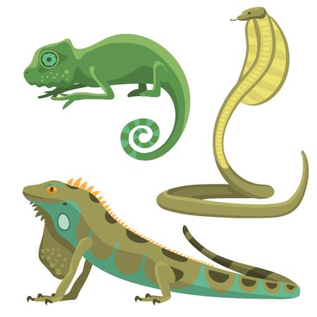 Reptil y anfibio colorida fauna vector ilustración reptiloid depredadores reptiles animales.