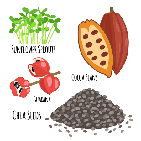 Vegetarian superfood healthy vegetable eco food fresh organic traditional gourmet nutrition vector illustration. Illustration
