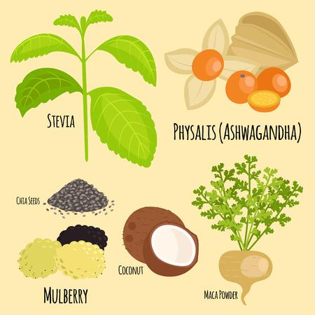 Vegetarian superfood healthy vegetable eco food fresh organic traditional gourmet nutrition vector illustration. Stock Vector - 87349874