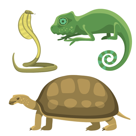 salamandre: Reptile et amphibiens faune colorée vector illustration reptiloïde prédateur reptiles animaux.