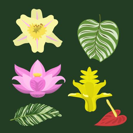 Tropical leaves summer green exotic jungle palm leaf nature plant botanical hawaii flora vector illustration. Illustration
