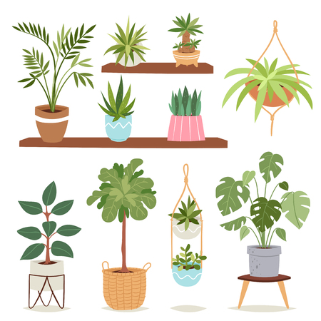 House indoor plants and nature flowers interior decoration houseplant natural tree flowerpot vector illustration.