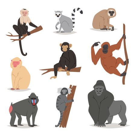 Monkey vector set cute animal macaque monkeyish cartoon character of primate chimpanzee, gibbon and babbon monkeyshines illustration isolated on white