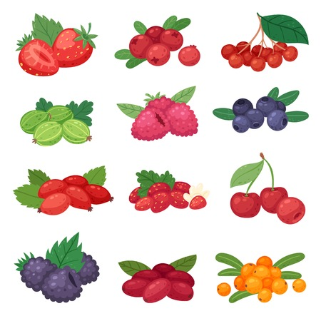 Berry vector berrying mix of strawberry blueberry raspberry blackberry and red currant illustration berrylike set isolated on white background