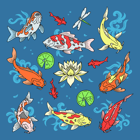 Koi fish vector illustration Japanese carp and colorful oriental koi in Asia. Set of Chinese goldfish and traditional fishery, isolated background.