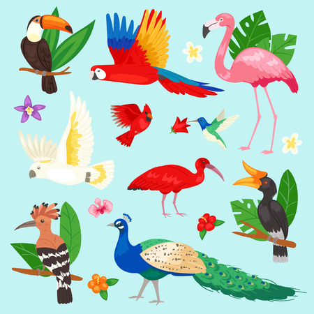 Tropical birds vector exotic parrot or flamingo and peacock with palm leaves illustration set of fashion birdie ibis or hornbill in flowering tropics isolated on background