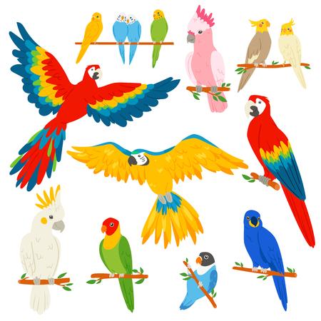オウムベクトルのオウムのオウムの性格と熱帯鳥や漫画のエキゾチックなコンゴウインコのカラフルなトロピックバーディーのセットは、白い背景に隔離