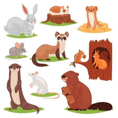 Scoiattolo di caratteri animalistici del fumetto di vettore degli animali della foresta in castoro cavo e selvaggio o lepre del coniglietto nel set di illustrazione di bosco di roditori di topo o ratto isolato su priorità bassa bianca Vettoriali