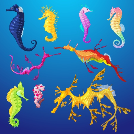 Seahorse vector seafish character or cartoon sea-horse undersea in tropical wildlife illustration set of exotic sea horse in aquarium or ocean isolated on background.
