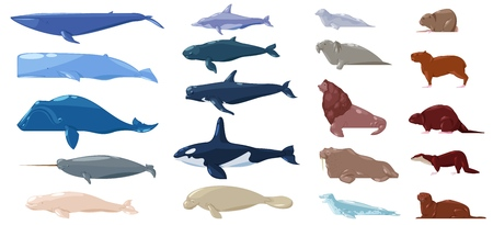 Sea mammal vector water animal character dolphin walrus and whale in sealife or ocean illustration marine set of sea-lion or sea-cow and seal or otter illustration set isolated on white background.