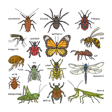 Insektenvektorkäfer-Käfer oder Ameise und fliegende Biene oder Schmetterling und Libelle oder Marienkäfer in Naturillustrationssatz von Kakerlake oder Spinne mit Mücke und Heuschrecke lokalisiert auf weißem Hintergrund