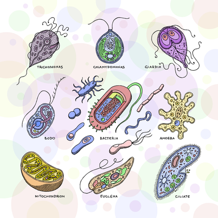 Virus vector bacterial infection virus-like illness illustration virulent bacterium set of microbiology organisms microbe or unicellular bacteria isolated on white background