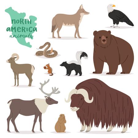 Caractère animalier de vecteur animal dans la forêt ours cerf wapiti en Amérique faune illustration jeu de chèvre de montagne prédateur américain isolé sur fond blanc