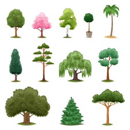 Tree types vector green forest pine treetops collection of fir palm birch cedar greenery garden with acacia sakura illustration isolated on white background