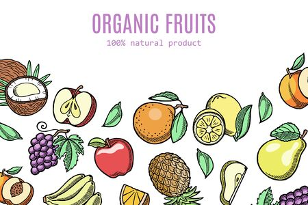 Organic eco fruits vector illustration. Exotic coconut, pineapple, grapes with garden peach or apple and apricot or pear and grapefruits. Sketch style colorful eco fruits banner.