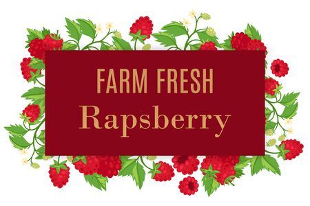 Fresh farm raspberry whole with leaves and flowers vector cartoon illustration summer frame poster. Summer berries healthy rapsberries food poster for vegeterian fruit shop.