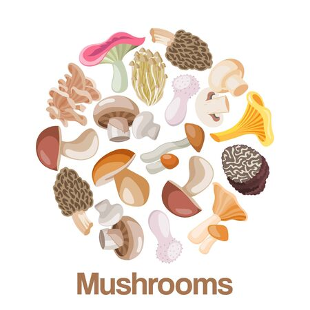 Mushrooms edible vegeterian mushrooming poster vector illustration circle composition. Cartoon champignon and boletus or forest chanterelle and lobster mushrooms patterned circle poster. Illustration