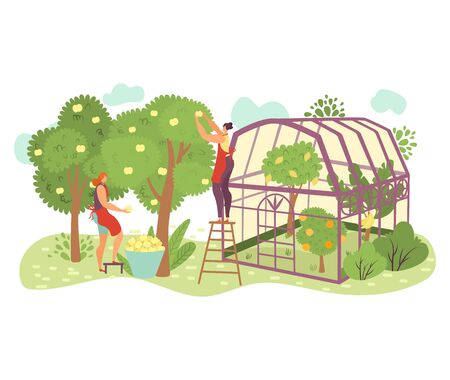 People in garden, organic farming flat illustration with people gardeners picking apples on farm, take care of plants. Natural fruits from farmers, greenhouse isolated on white.