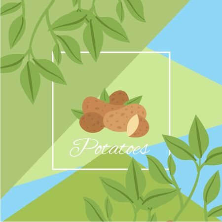 Potatos with green leaves in frame for farm eco market background vector illustration. Food market with organic potato advertisement poster.