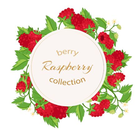 Raspberries berries and leaves circle banner with typography isolated on white cartoon vector illustration. Banner with summer sweet fruit raspberries.