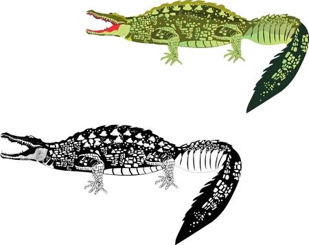 nile river: 2 crocodiles isolated on white