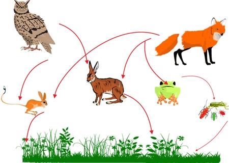 ecosistema: Cadena alimentaria en la naturaleza de c�mo el trabajo de ilustraci�n de los ecosistemas Vectores