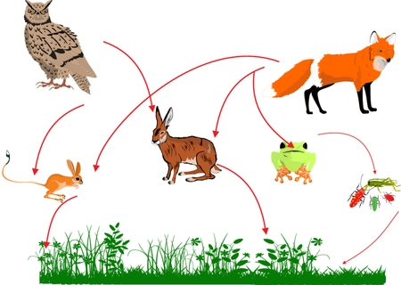 Food chain in nature how the ecosystem work illustration