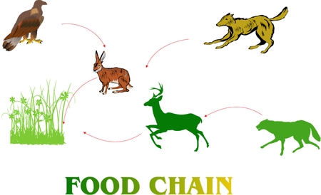 chain food: Food chain in nature how the ecosystem work illustration