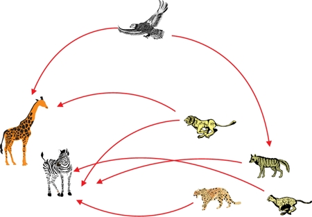 chain food: Food chain biological circle of nature in africa illustration
