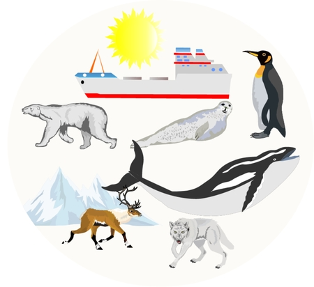 north pole: North animals set. North pole life collage, bear, wolf, reindeer, penguin, whale. Illustration