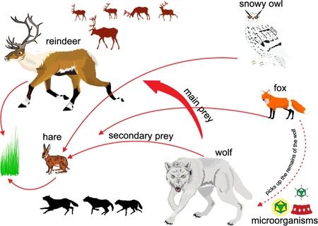 chain food: North nature ecosystem illustration. Food chain and interconnection among animals