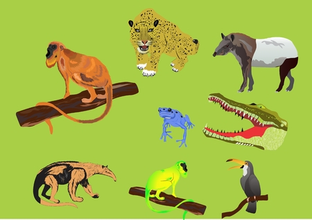 booby: South American jungles animals set.