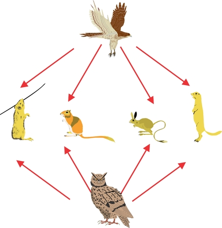 rodents: Rodents and birds feeding on them