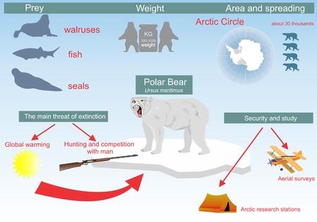 ecosistema: Polar Descripción vida oso su lugar en el ecosistema Vectores
