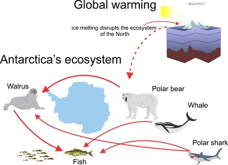antarctic: Antarctic ecosystem infographic, wildlife, polarbear, walrus environment protection, isolated on white