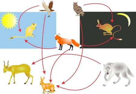 ecosistema: La cadena alimentaria de los ecosistemas del desierto, de día y de la noche los cazadores y presas