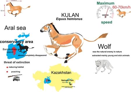 donkey: Kulan central asian wild donkey infographic, wildlife, environment protection, isolated on white
