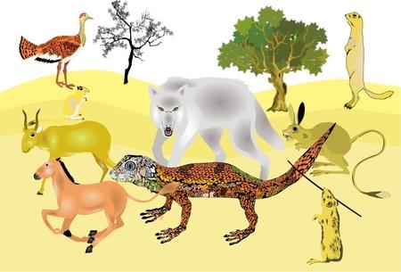animales del desierto: Los animales del desierto composición establecer