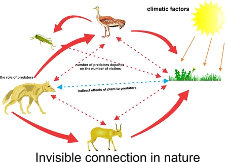 Food chain illustration, ecosystem life circle with bustard, wolf, antilope