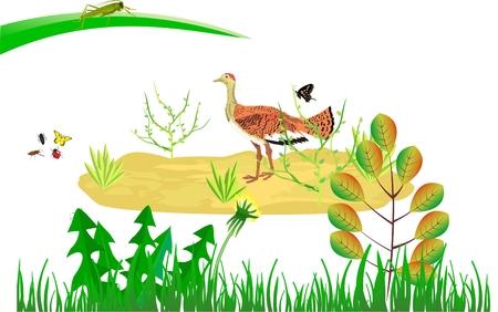 Bustard bird of plane land of eurasia