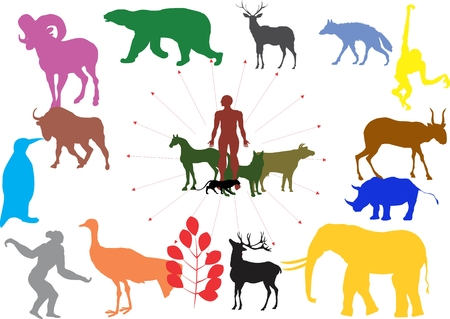 man made: How man made domestic animals from wild animals. Colored silhouettes of animals and man