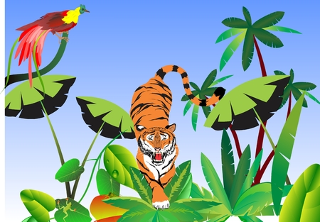 angry sky: Tiger on jungle background