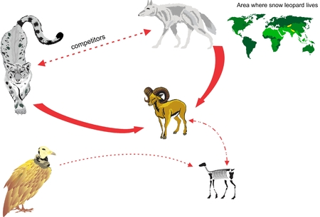 chain food: Tibet mountain fauna food chain-ecosystem, world map, area of leopard Illustration